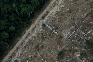 Brazil Amazon deforestation soars to 11-year high under Bolsonaro