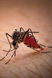Can mosquitoes spread coronavirus?