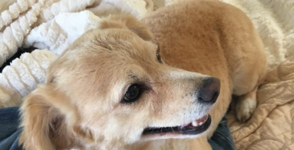Seven Things Conservatives Should Be Thankful For.