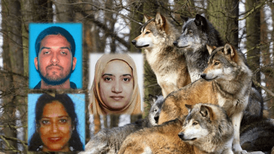 The Wolf Pack Profile