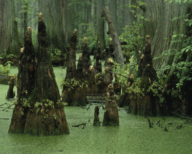 The Ascension of the DC Swamp Creatures