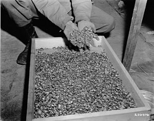 https://upload.wikimedia.org/wikipedia/commons/thumb/6/60/Buchenwald_Property_80623.jpg/300px-Buchenwald_Property_80623.jpg