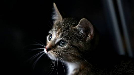 House passes bill outlawing the eating of cats and dogs.